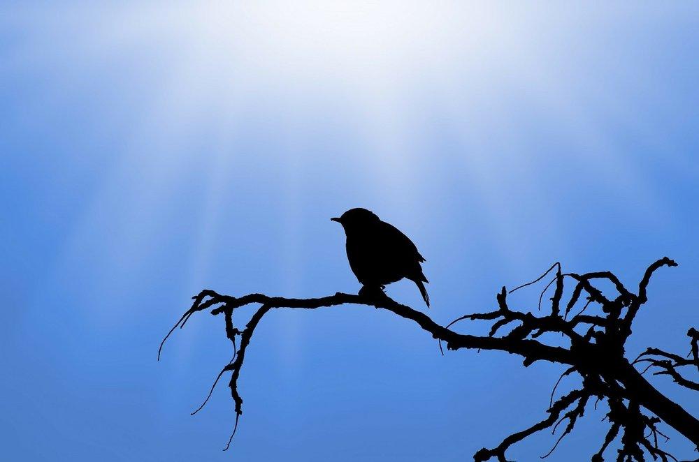 bird-313613_1280.jpg