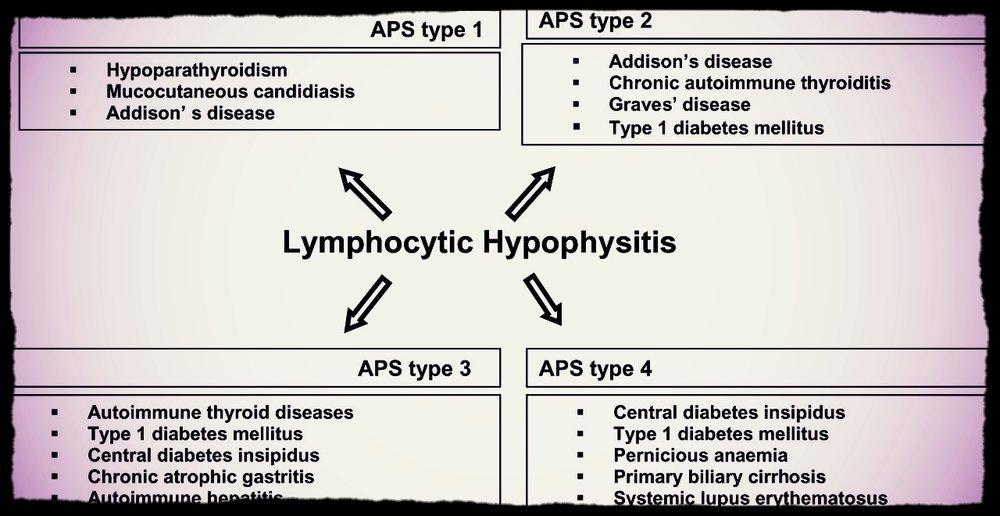 hypophys.jpg