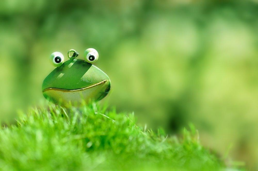 frog-1788178_1280.jpg