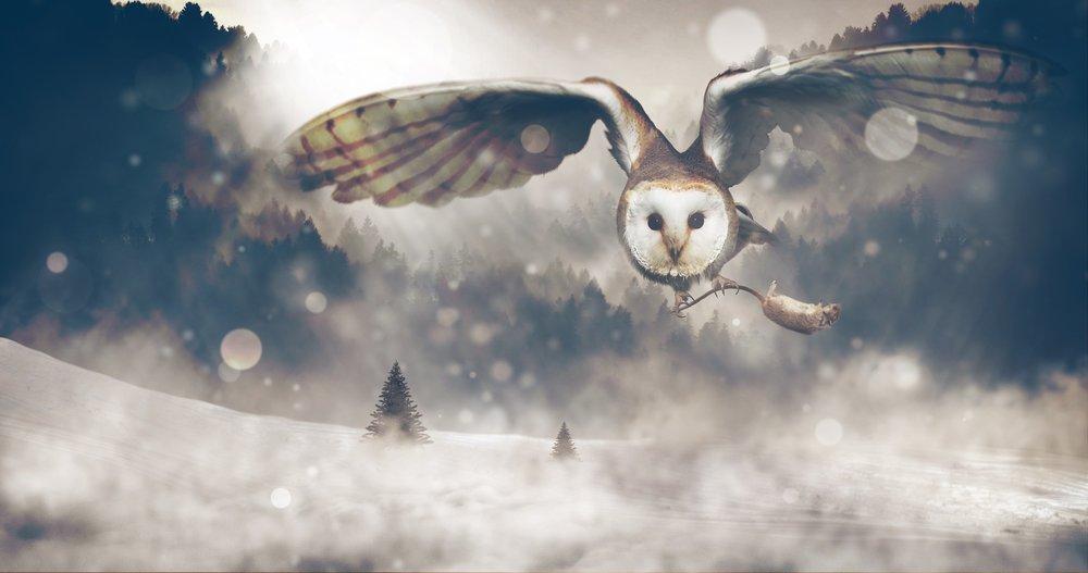 owl-1829586_1920.jpg