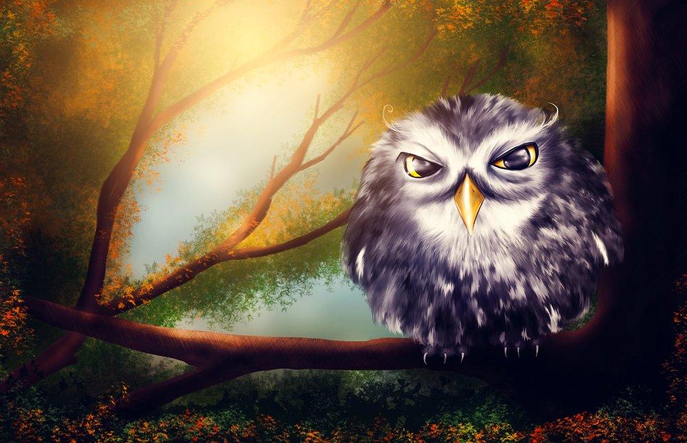 owl upset