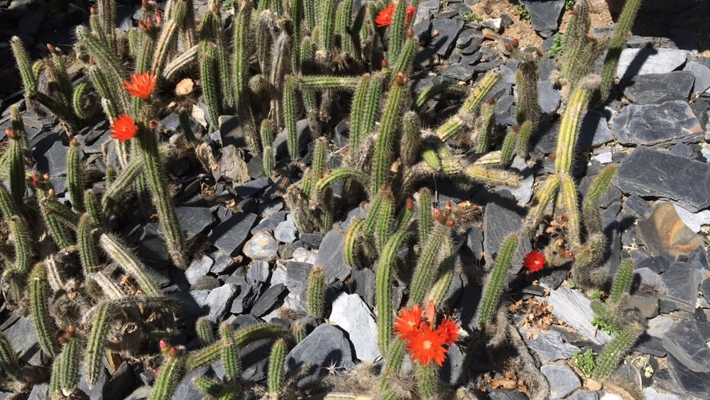 cacti2.norasibleydenker