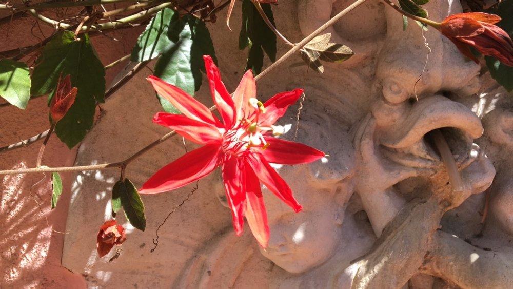 passionflower.norasibleydenker