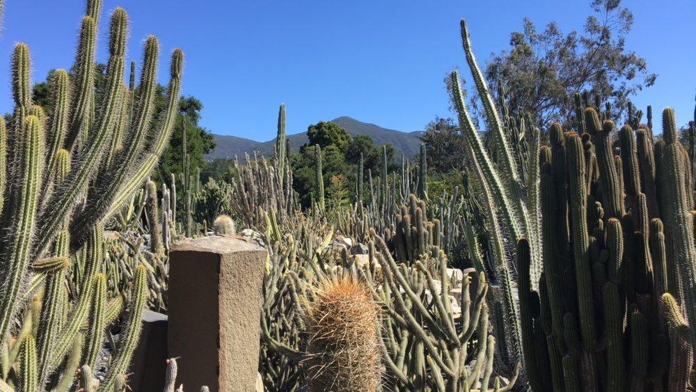 cactusgarden.norasibleydenker