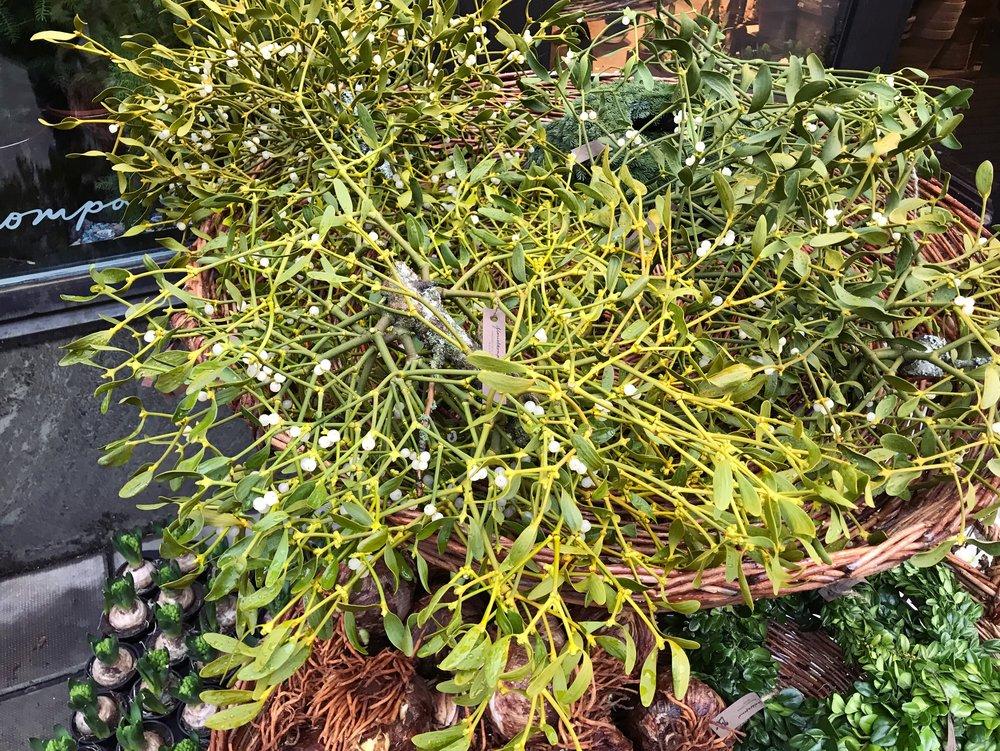 NORASIBLEY.mistletoe.JPG