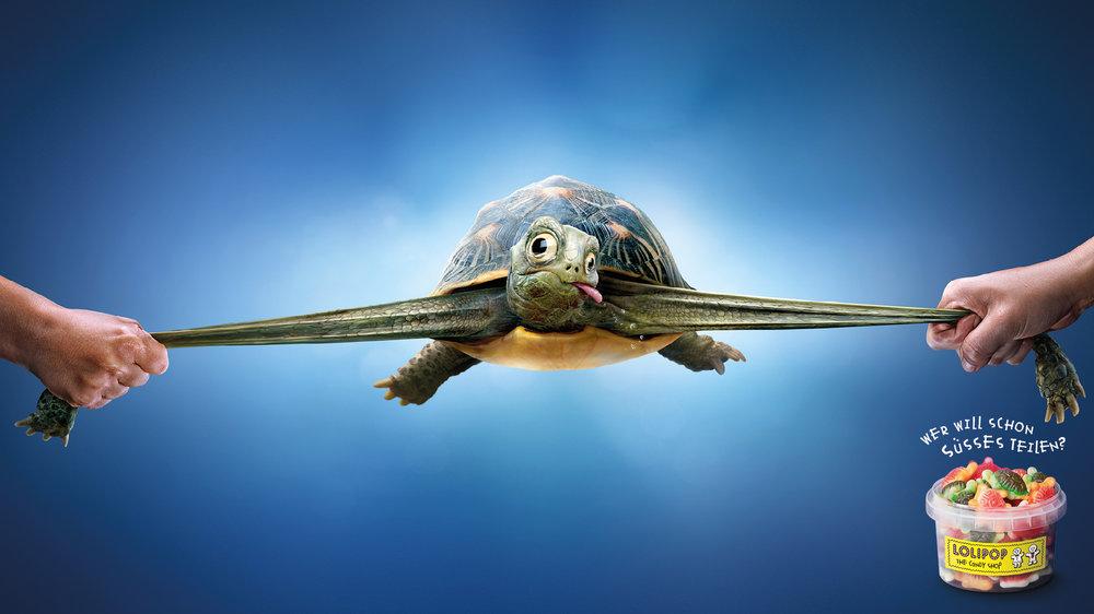3_Lolipop_turtle.jpg