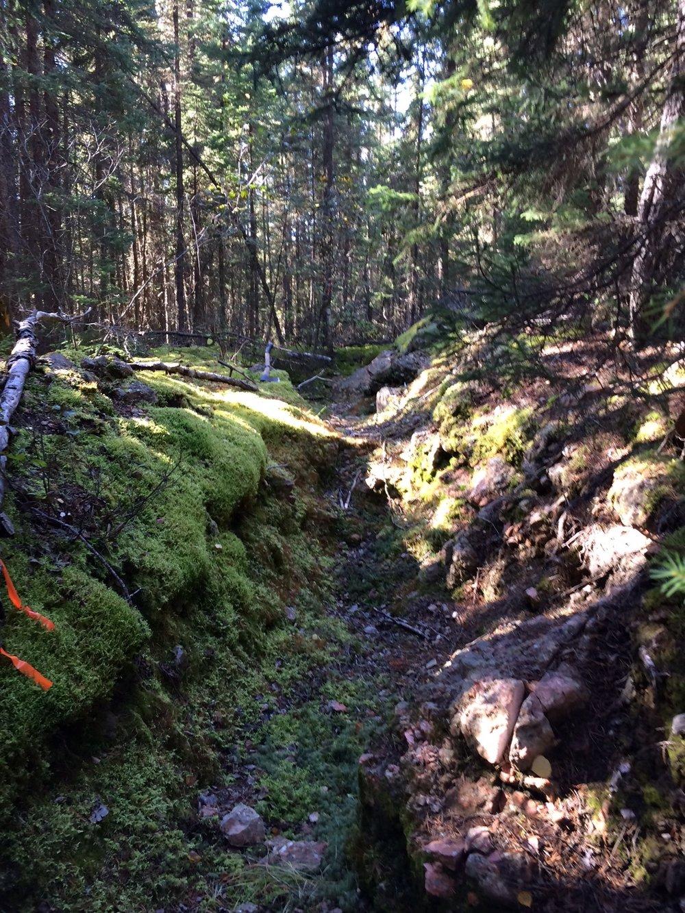 Overgrown historic trench in spodumene-bearing Zoro pegmatite Dyke 1.