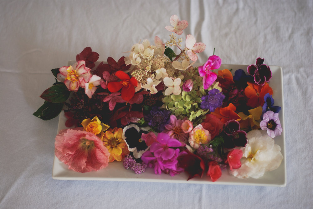 The Lived Flower Transactions With Beauty