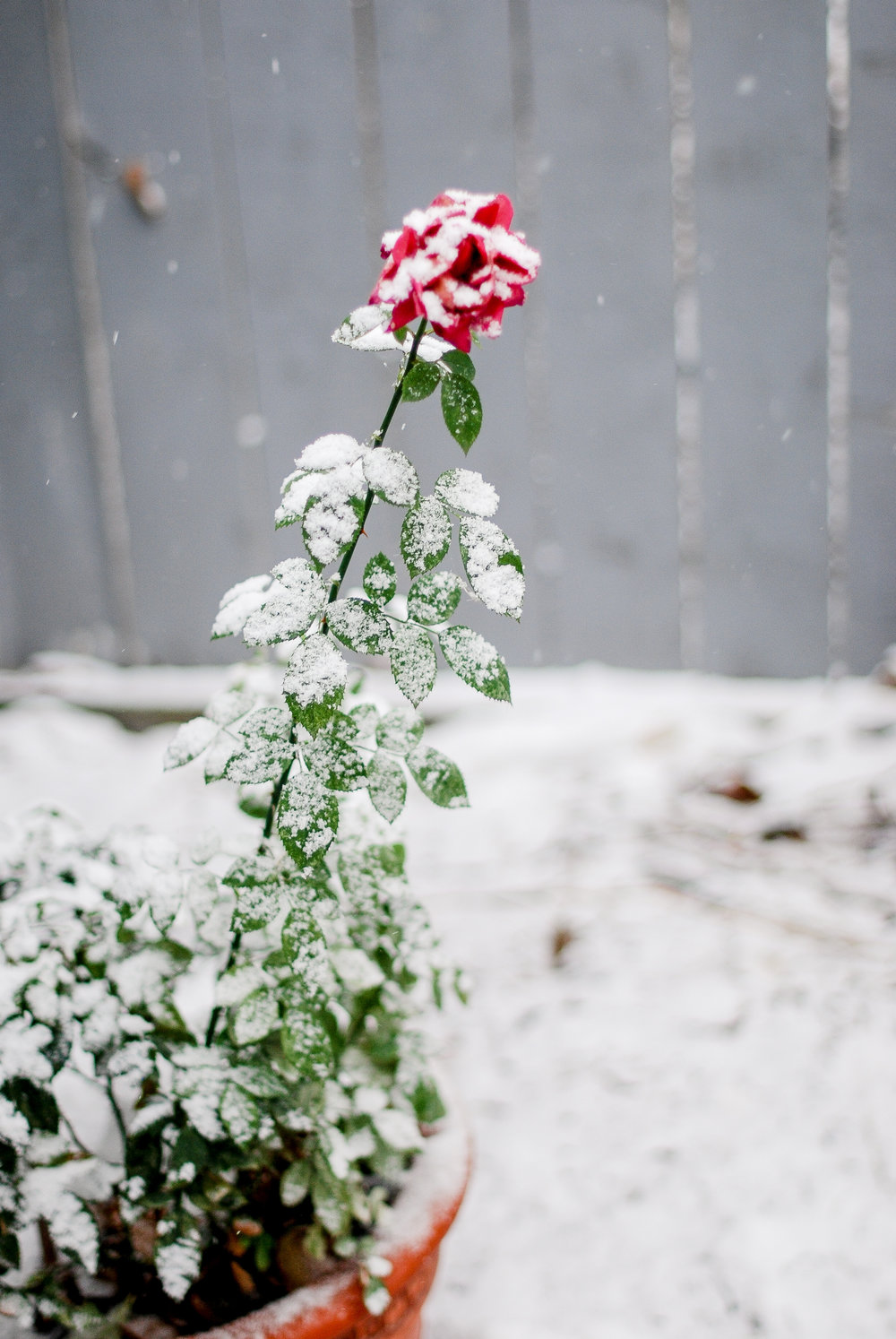 snow in october-9.jpg