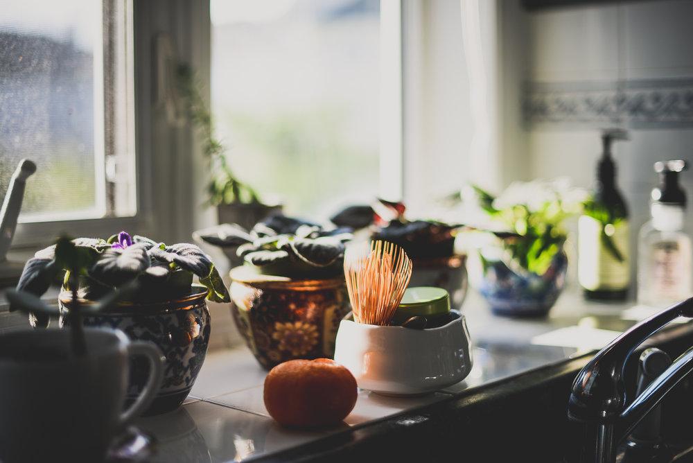 windowsillwithplants