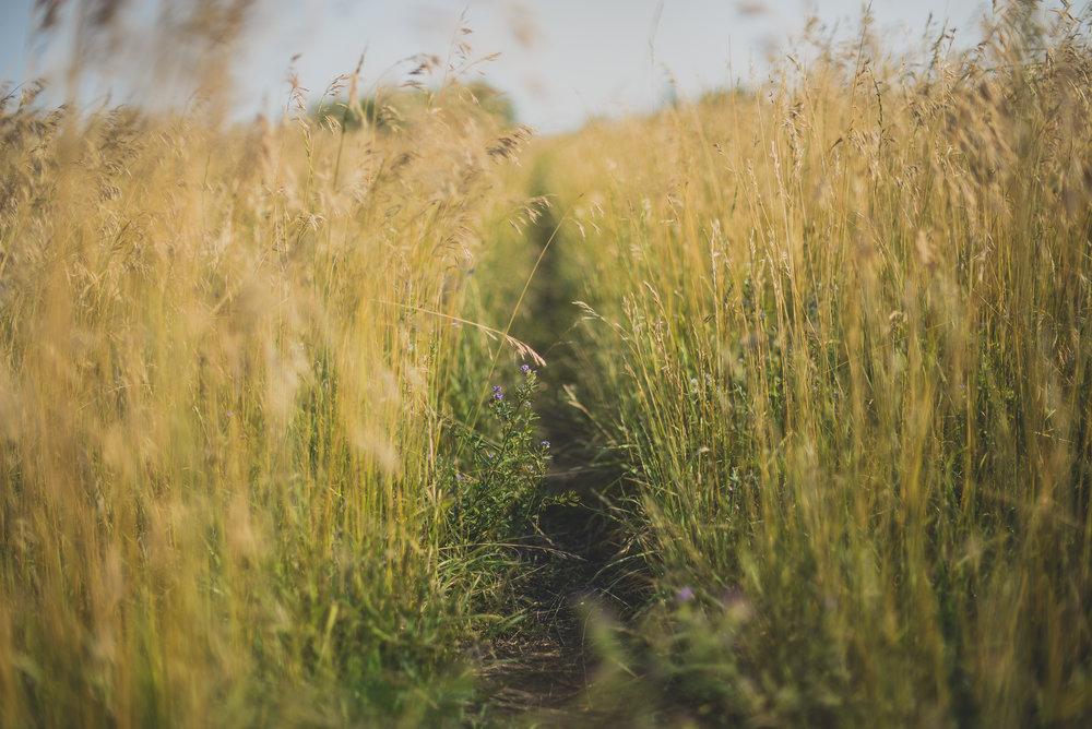 grassy path