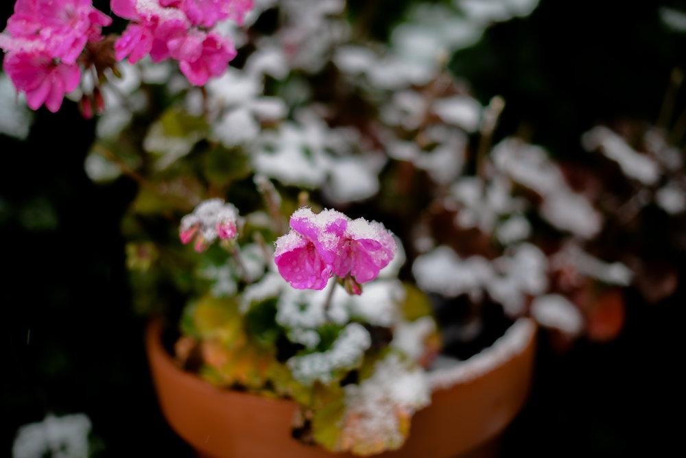 02-snow in september-9.jpg