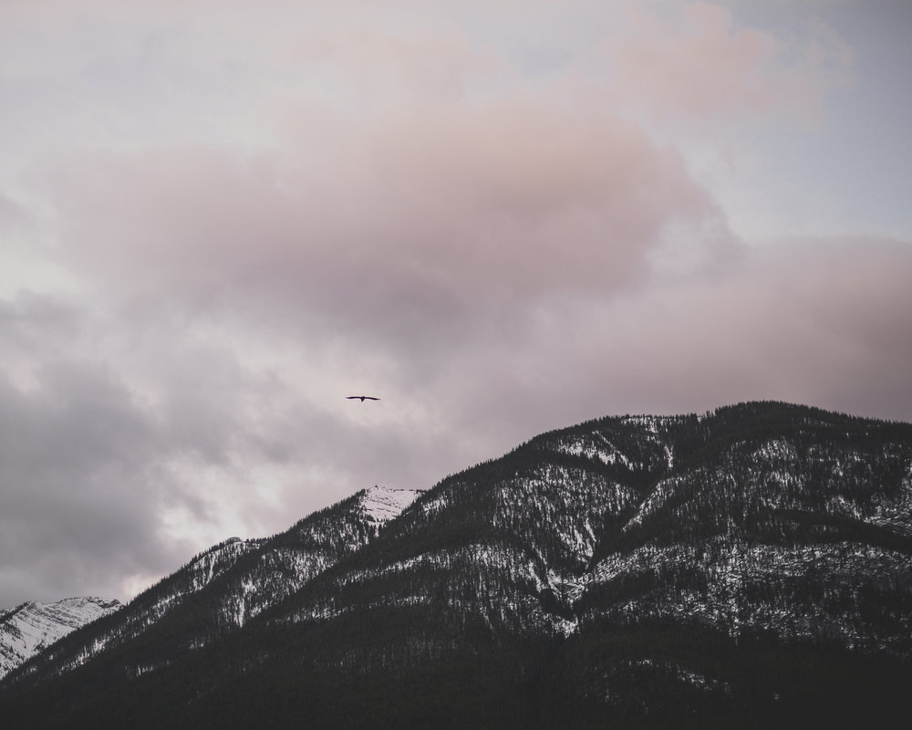mountains and bird