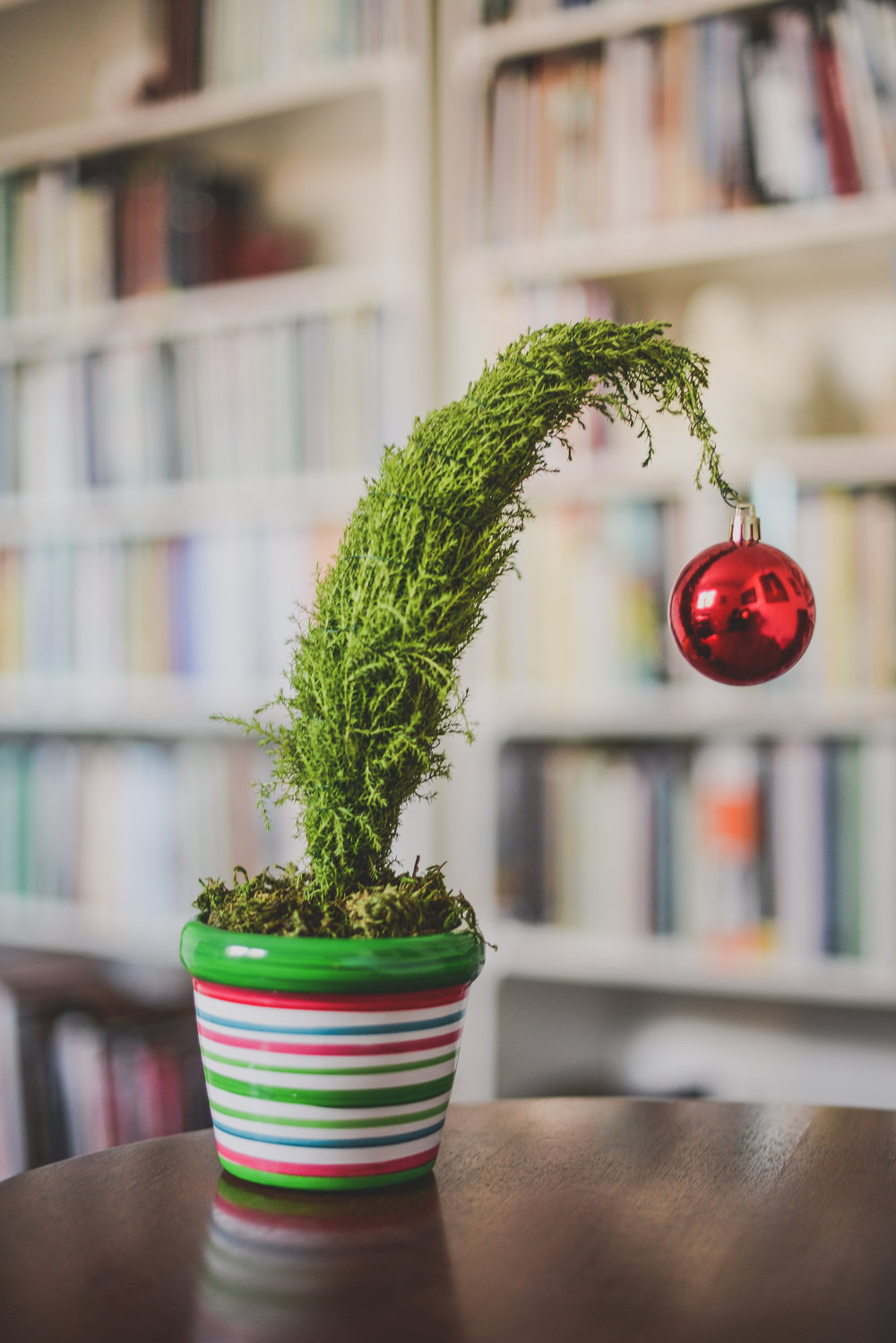 Unthinkable House Plant Tree. grinch tree A Holiday Manifesto for Introverts  Transactions with Beauty