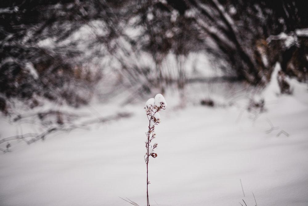 09-snow day-31.jpg