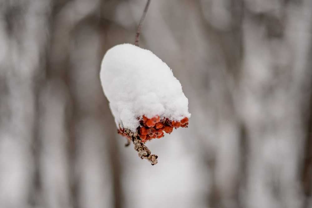 11-snow day-51.jpg