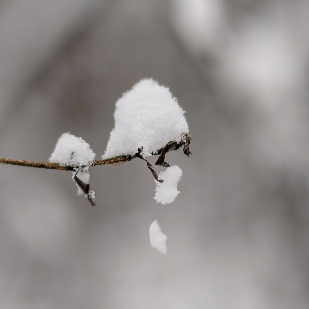 15-snow day-80.jpg
