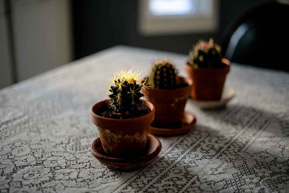 3 cacti