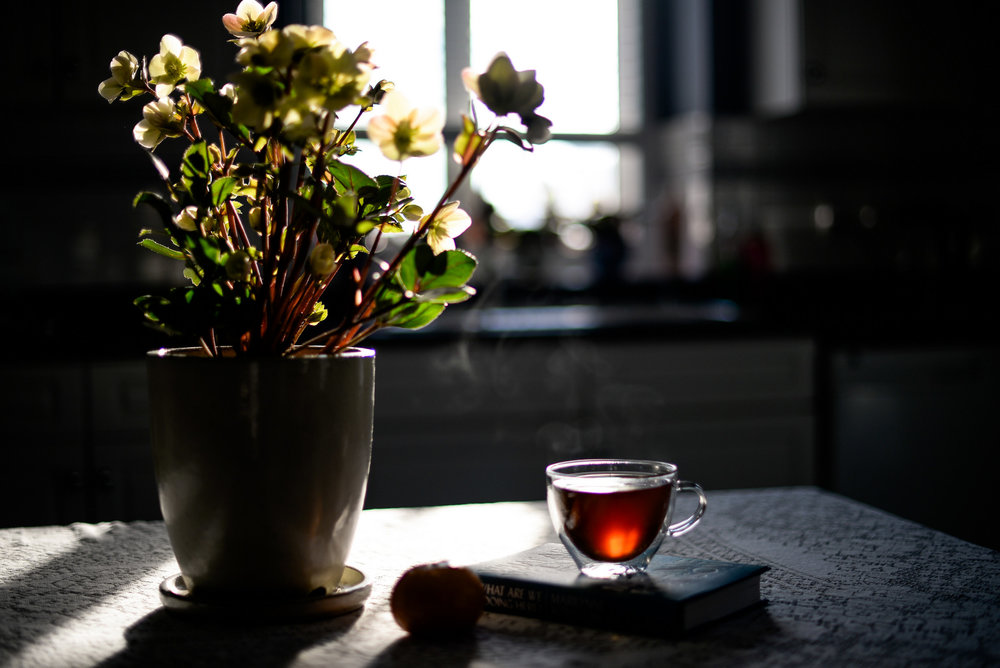 tea and potted plant