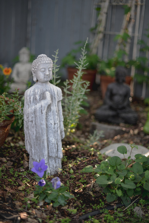 my backyard garden
