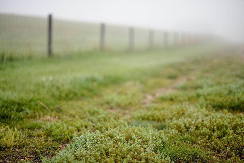 fog and path