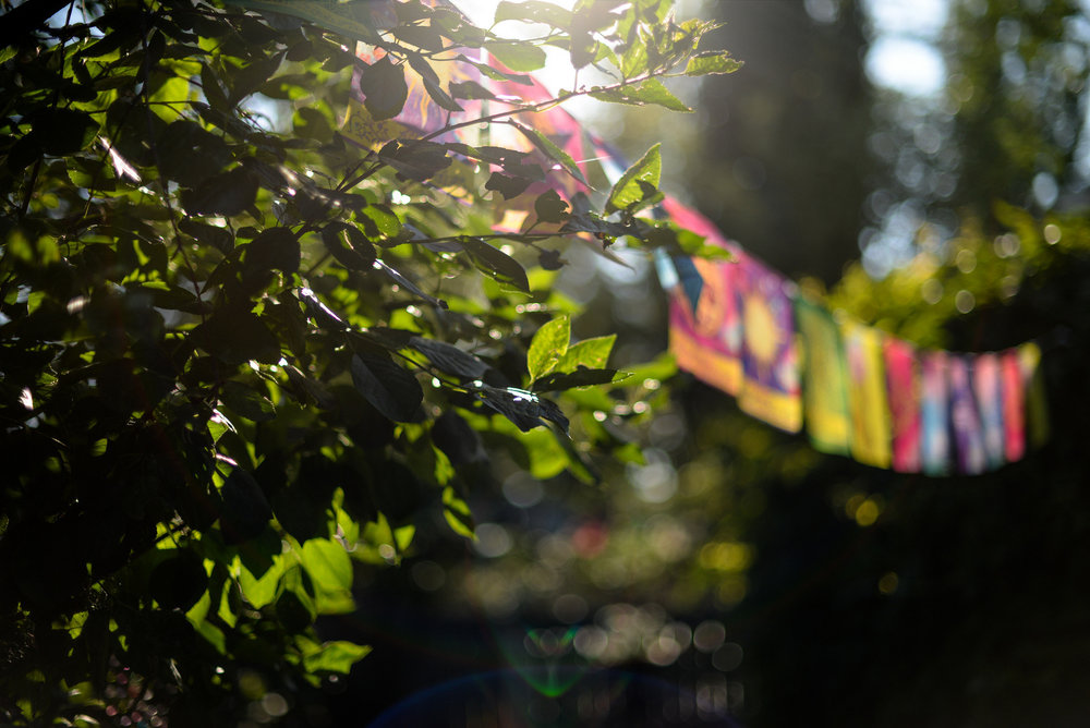 3-july backyard-28.jpg