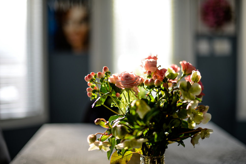 pink roses and sunlight