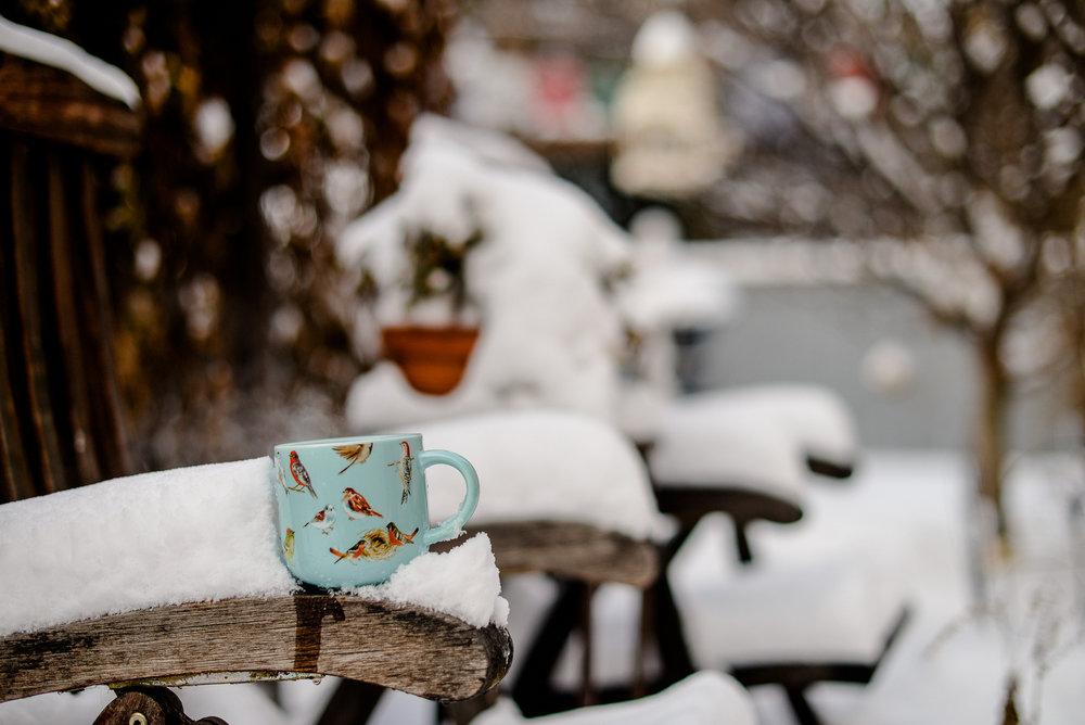 bird mug in snow