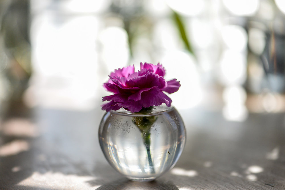 flower in a small vase