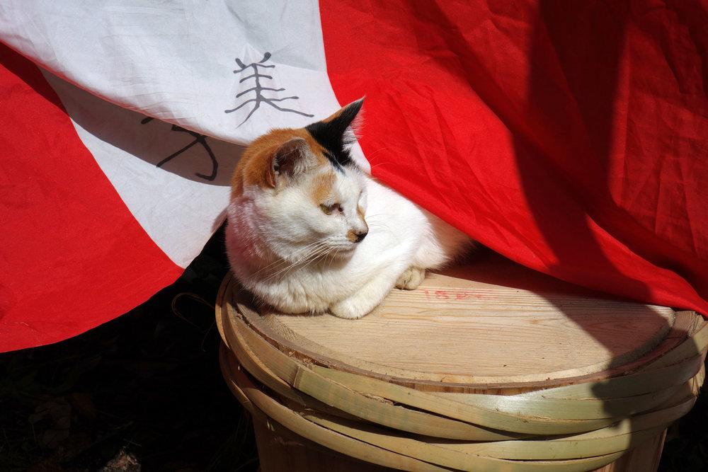 Tokyo-Fushimi-Inari8.jpg