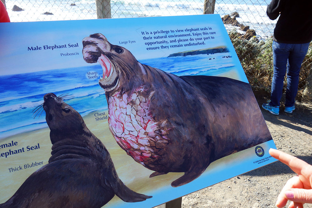 Elephant-Seals-Web-7.jpg