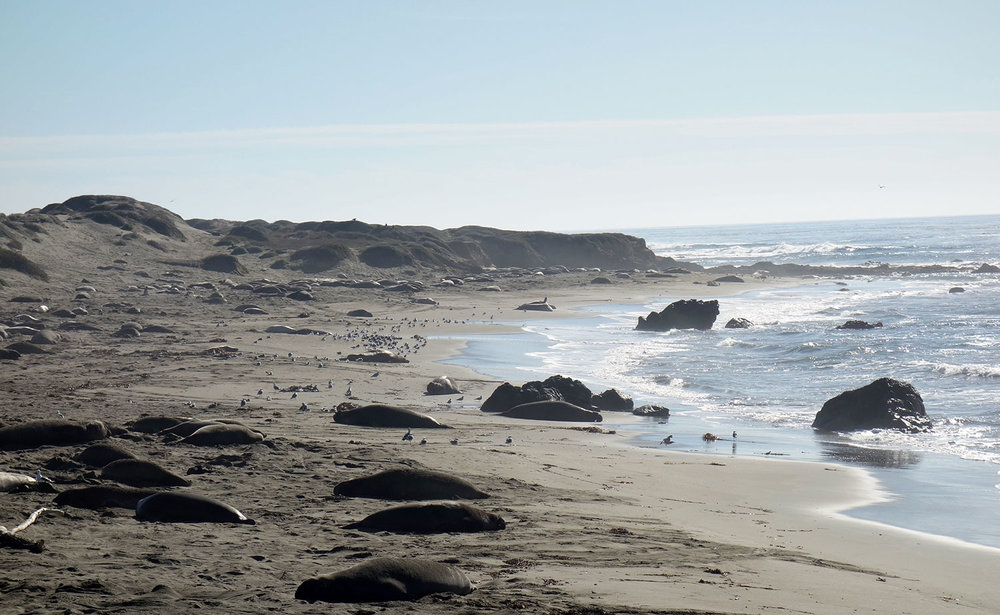 Elephant-Seals-Web-6.jpg