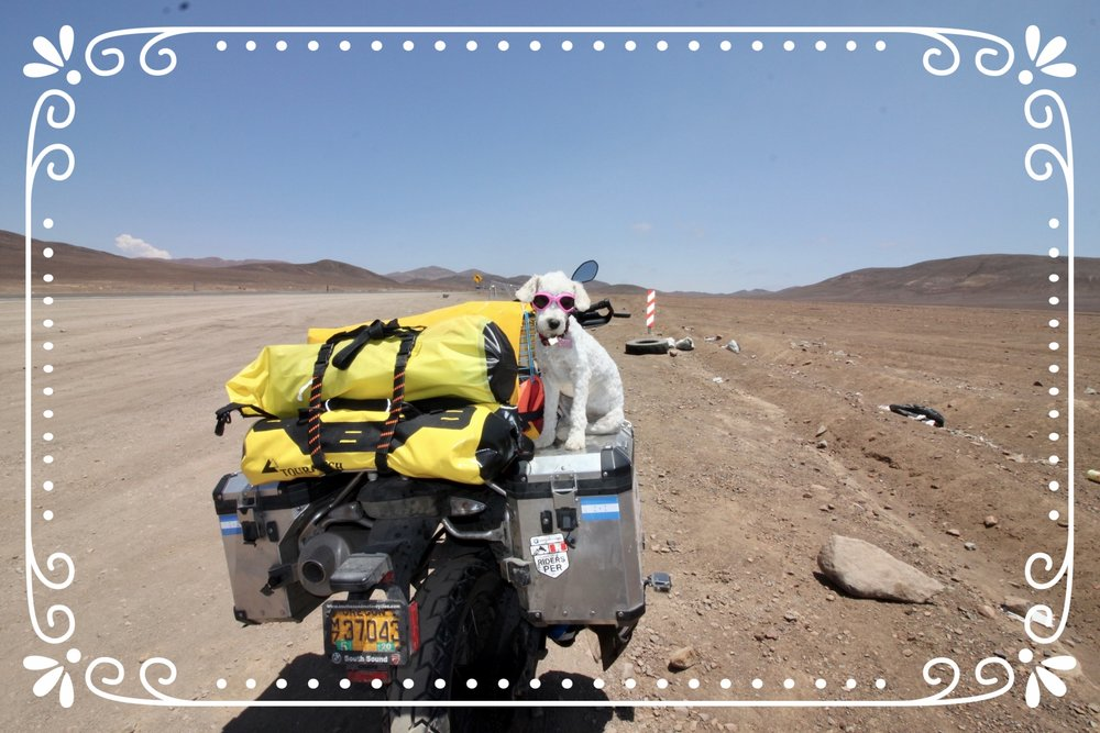 Chilean Dog Rescue: The Final Chapter — Riding 4 Adventure