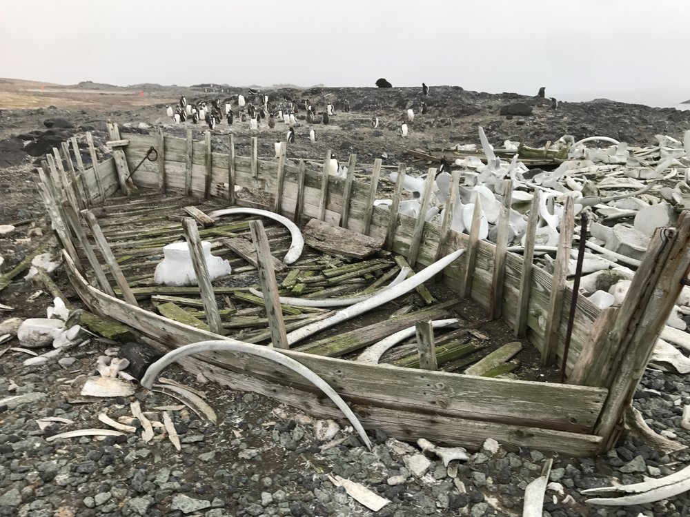 Whale bonds and the bones of an old boat guarded by penguins.