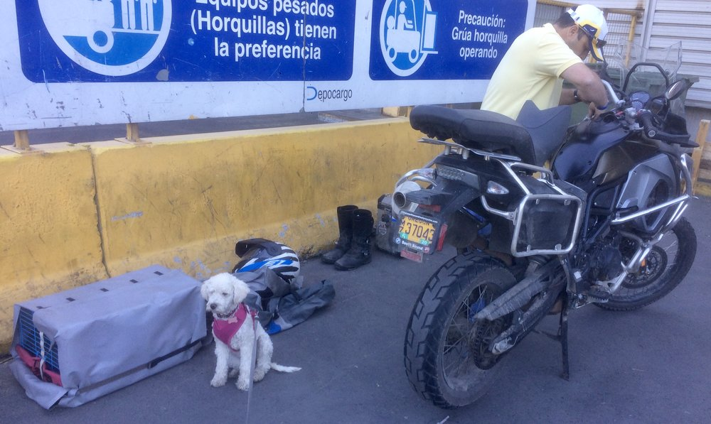 Suri keeps guard while Julio handles the bike disassembly.