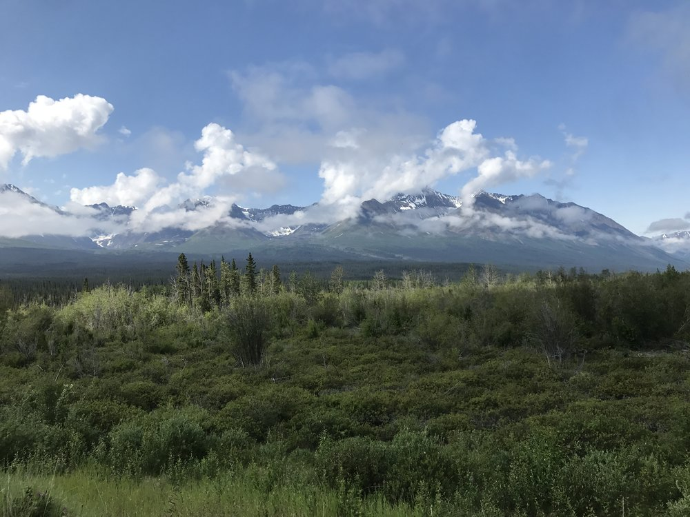 Mountains and forest west of Haines Junction.