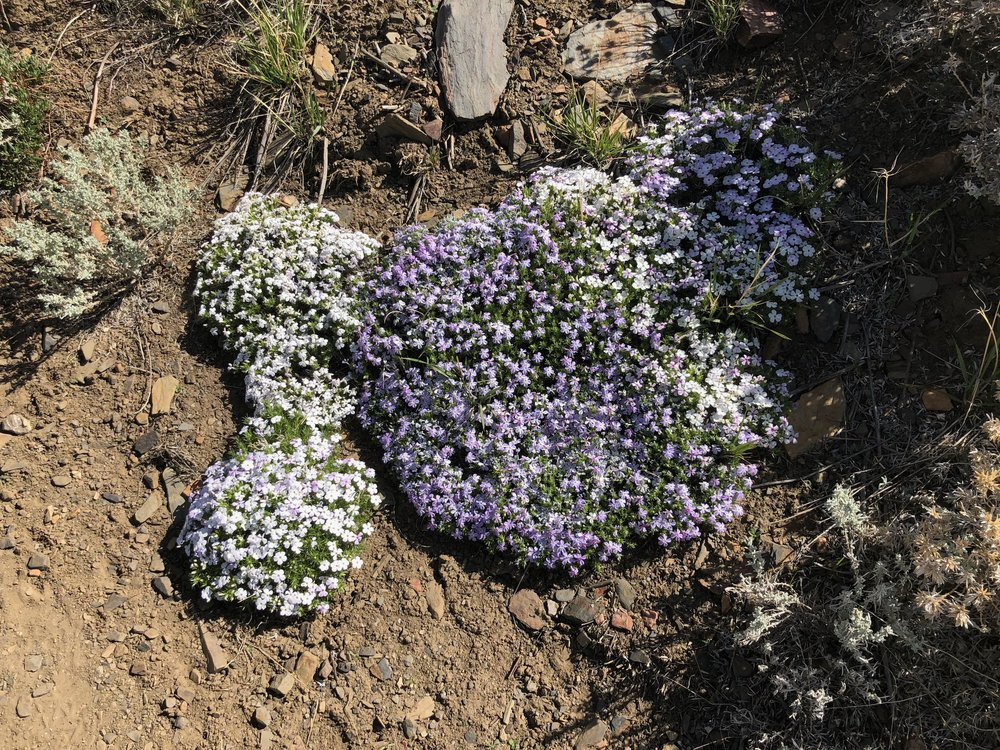 High Desert Flowers