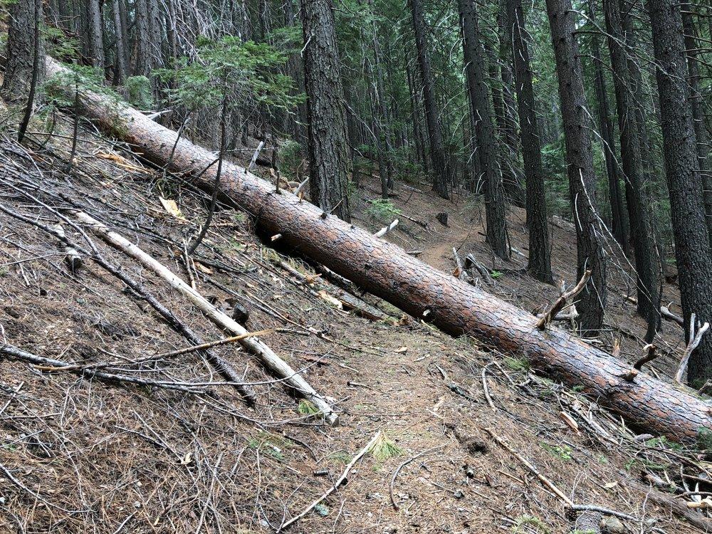 Path blocked by huge down tree