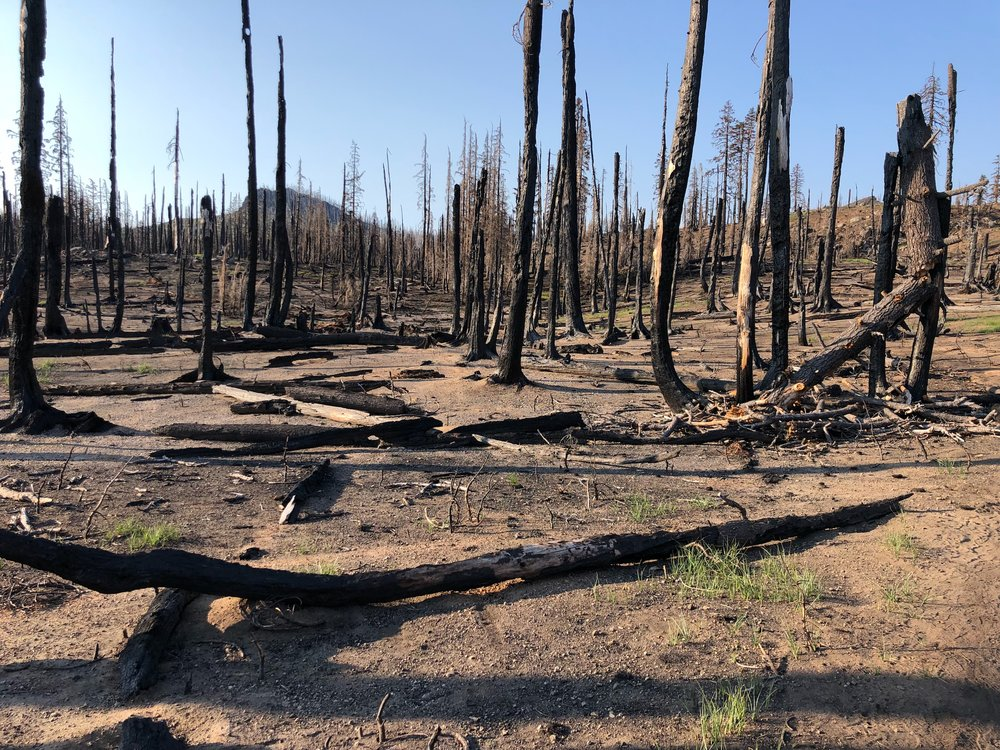 Results of last year's fires
