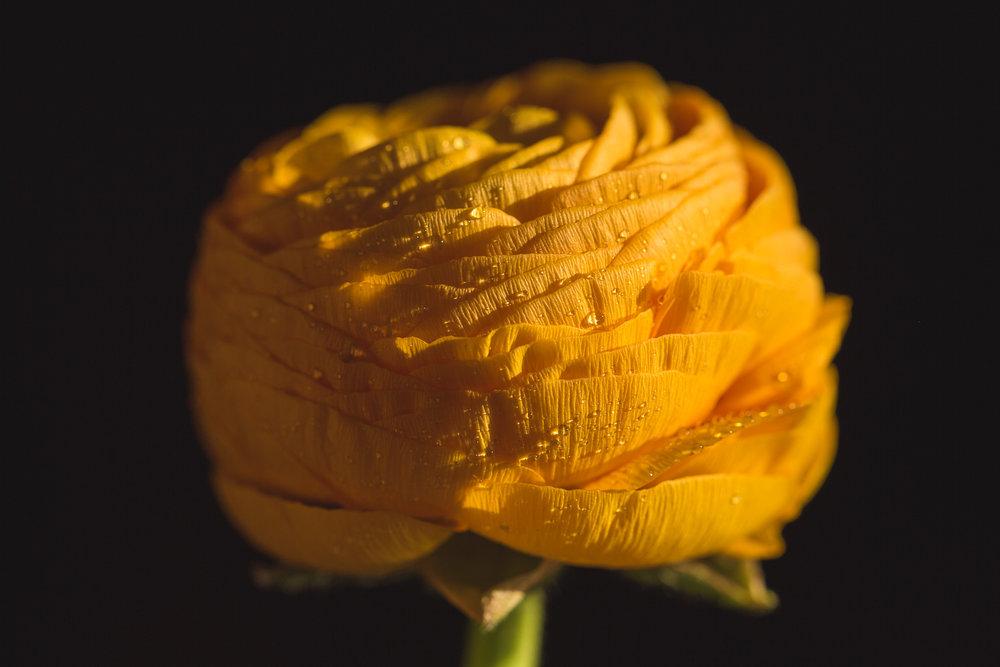 yellow (1 of 1).jpg