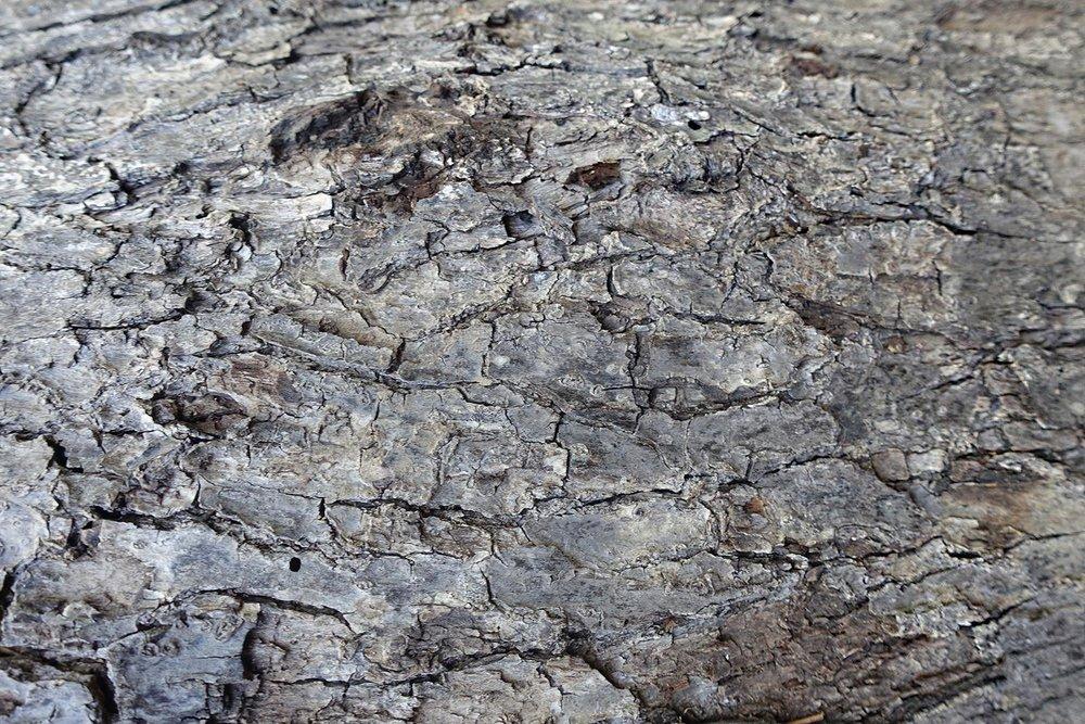 material-bark.jpg