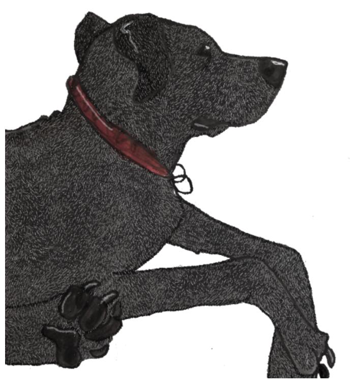 Pet portrait illustration, Pen & ink, digital illustration