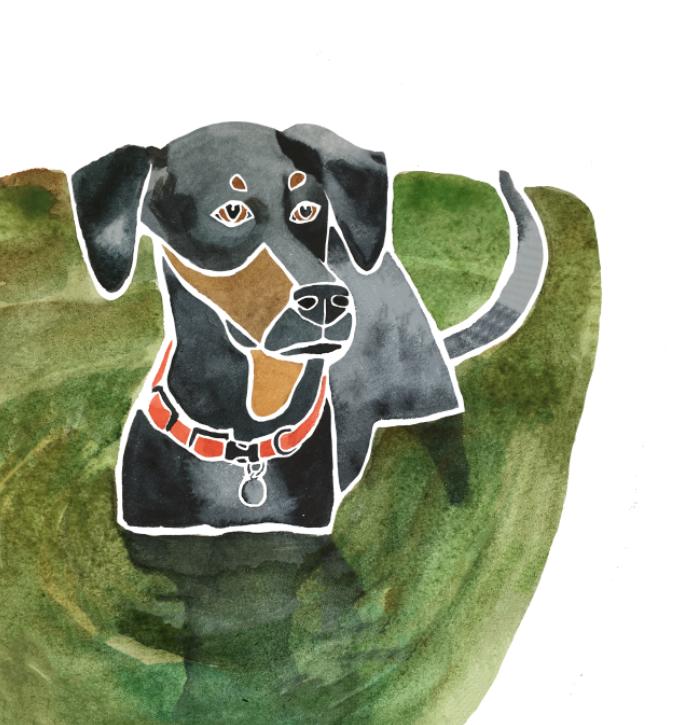 Watercolour dog portrait, Sarah Campbell Illustration