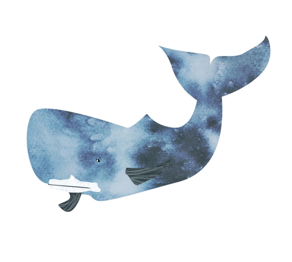 Whale, watercolour & digital, Sarah Campbell illustration
