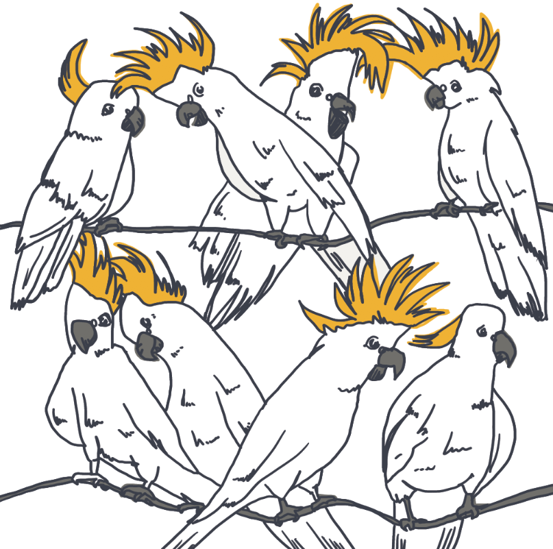 Cockatoo-Australians-bird-illustration-pen-ink-digital