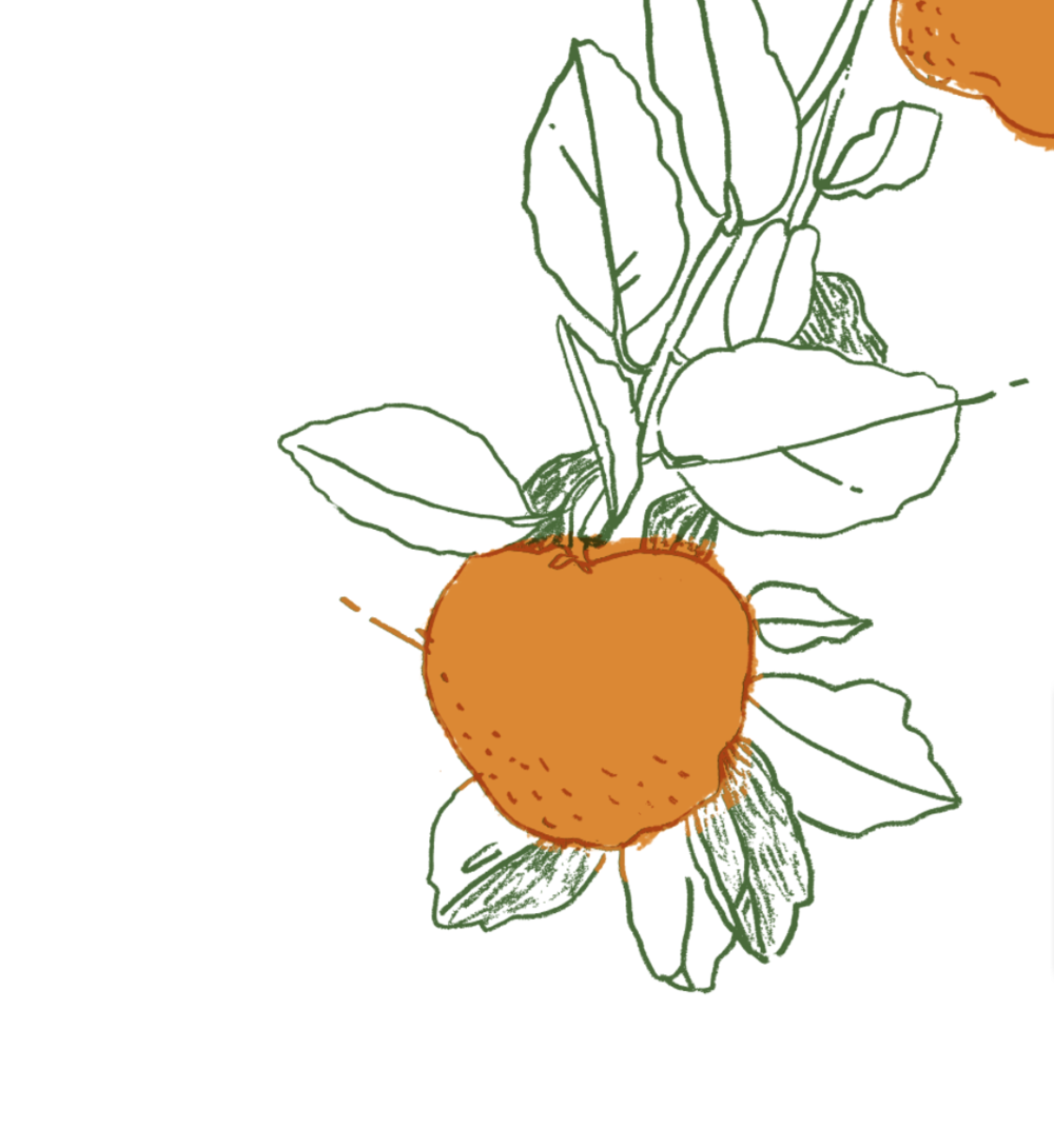 citrus illustration, pen and ink, digital art