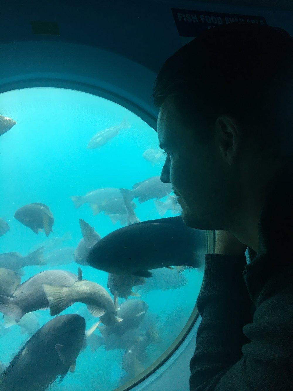 Catalina Island Submarine
