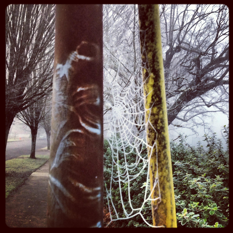Frozen spider web!
