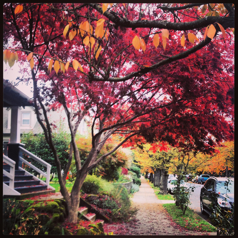 Fall in the neighborhood.