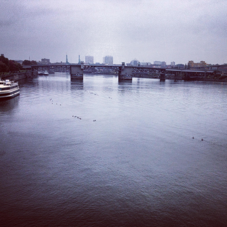 Grey morning, geese swimming.